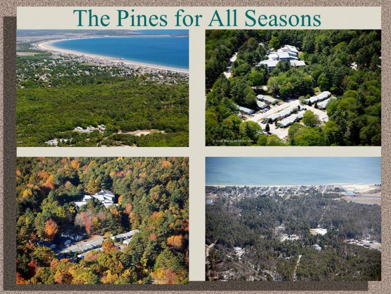 The Pines for All Seasons